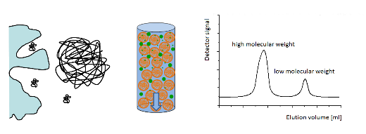 size elusion chromotography Results the aim of this study was to develop a size exclusion-based ultrahigh-pressure liquid chromatography (uhplc-sec) method (fast-sec) to analyze the aggregate and fragment formation of a bi-specific crossmab during bio-process and formulation development.